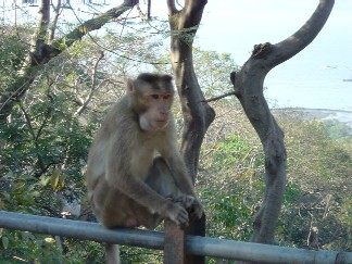 Monkey on a gate